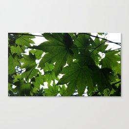 Vine Maple After Summer Rain Canvas Print