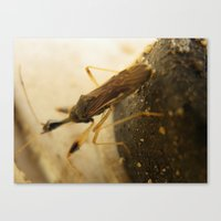 bug Canvas Prints featuring bug by Dottie