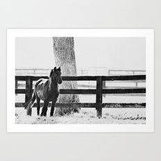 horse by the fence Art Print