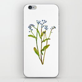 Forget-me-not flowers watercolor art iPhone Skin