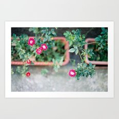 Roadside Flowers Art Print