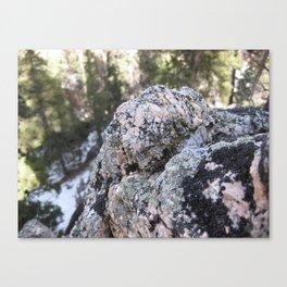 Crystalline Moss Canvas Print