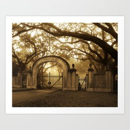 Wormsloe Savannah, GA Art Print