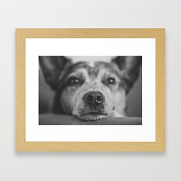 A Dog's Life Framed Art Print