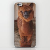 llama iPhone & iPod Skins featuring Llama  by JCalls Photography
