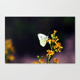 White Butterfly on Yellow Flowers Canvas Print