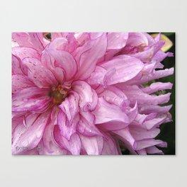 Dahlia named Annette C. Canvas Print