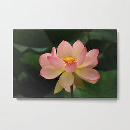 Peaceful Zen Garden Pink Lotus Floral Metal Print