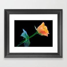 Thanksgiving Rose Framed Art Print