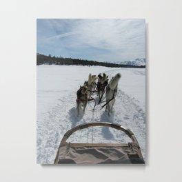dogsledding in Northern California Metal Print