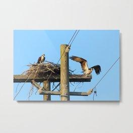 Osprey Nest in North Topsail Beach Metal Print