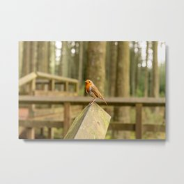 Robin sitting on a wooden bannister Metal Print