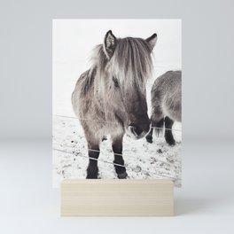 snowy Icelandic horse bw Mini Art Print