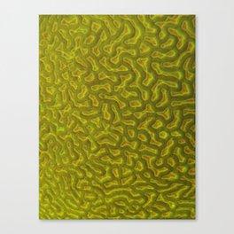 Brain coral 1 Canvas Print