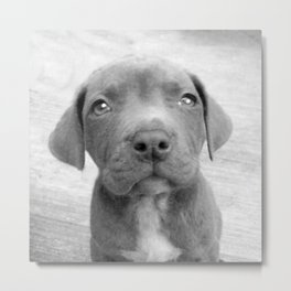 Pitbull puppy dog Metal Print