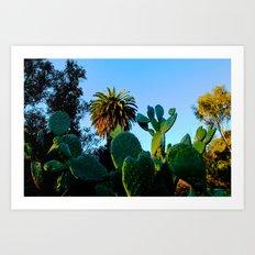 California Spikey Cactus Art Print