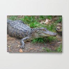 Alligator - Hello Darlin' Metal Print