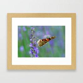 Butterfy 57 Framed Art Print