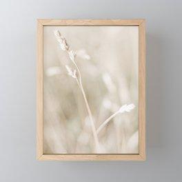 Golden Wheat Stalk in the Morning Sun. Minimalistic print - fine art photography Framed Mini Art Print