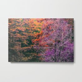 autumn tree in the forest with purple and brown leaf Metal Print
