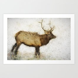 Grand Canyon Elk No. 1 Wintered Art Print