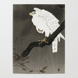 White Eagle on a tree - Vintage Japanese Woodblock Print Poster