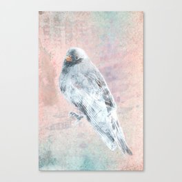 A Forest Visitor Canvas Print