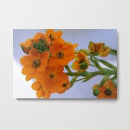 Beautiful Orange Flower Metal Print