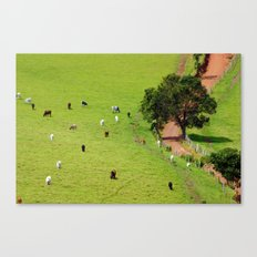 their path Canvas Print