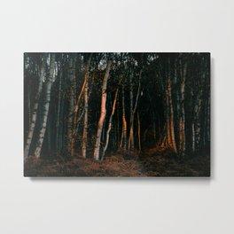 Broken Light Over Birch Bark Metal Print