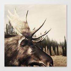 Tom Feiler Moose Canvas Print