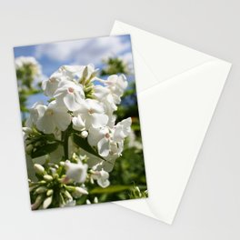 White Flowers & Blue Sky Stationery Cards