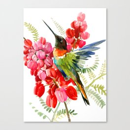 Collared Inca Hummingbird and Coral Pink Flowers Canvas Print