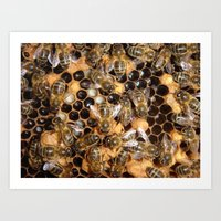 Honey Bee Frame with Brood Art Print