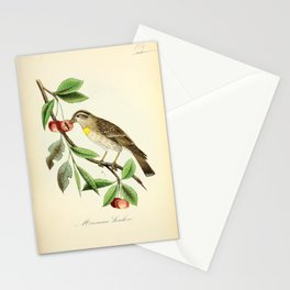 Doubtful Sparrow, passer petronia16 Stationery Cards