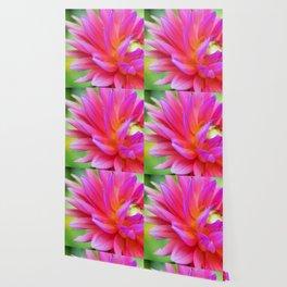 Bright Pink Dahlia Flower Close-Up (1 of 4) Wallpaper
