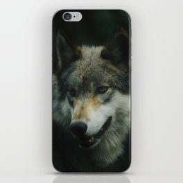 Gray Wolf (Color) iPhone Skin