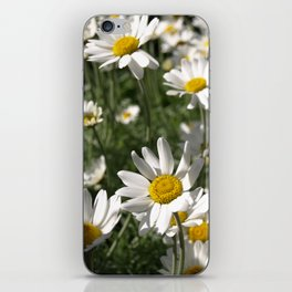 SUN WORSHIPPING DAISY FLOWERS iPhone Skin