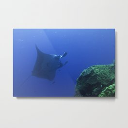 Manta at the cleaning station Metal Print
