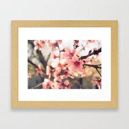 Spring has come 2 Framed Art Print