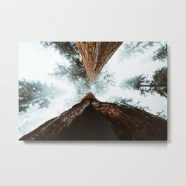 Stand in Awe of the Giant Forest Metal Print