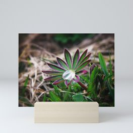 Lupines in spring 1 Mini Art Print