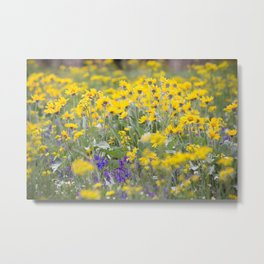 Meadow Gold - Wildflowers in a Mountain Meadow Metal Print