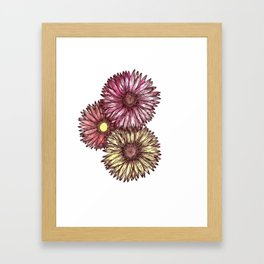 Pink and Yellow Gerber Daisies Watercolor and Ink Painting Framed Art Print