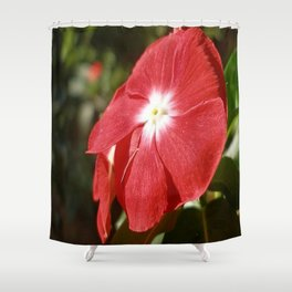 Close Up Of A Red Busy Lizzie Flower Shower Curtain