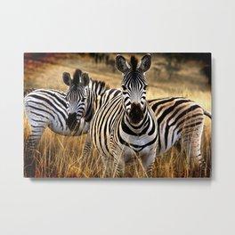 Zebra Safari Metal Print
