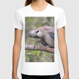 Curious beautiful Jay bird T-shirt