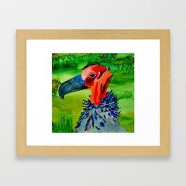 Pretty Vulture  Framed Art Print