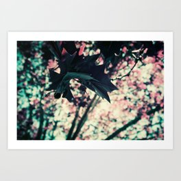 Spring in Purple Chrome, St Kilda Art Print