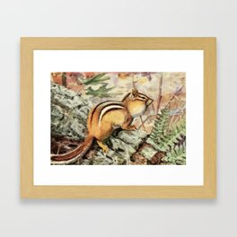 Fuertes, Louis Agassiz (1874-1927) - Burgess Animal Book for Children 1920 (Striped Chipmunk) Framed Art Print